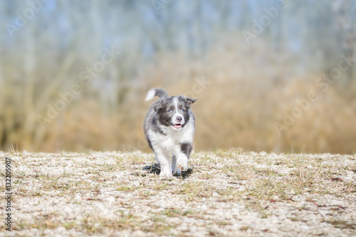 border collie spiele