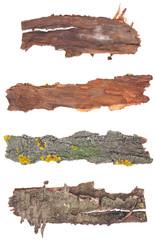 Bark tree isolated on white background. Set