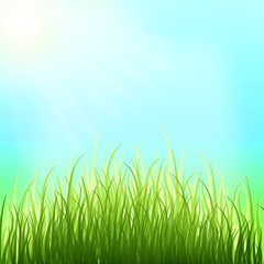Spring background. Sunny day. Young grass.