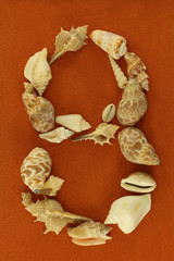 """Figure eight """" 8 """" made up by cockleshells on peachy sand background."""