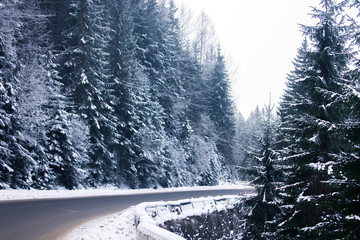 Road in winter forest of the Carpathians