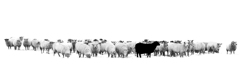 Schwarzes Schaf in der Schafherde