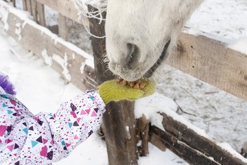 the friendship of a young child and a white horse. Feeding with