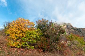 Beautiful colour autumn landscape in mountains