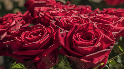 Beautiful red roses in a bouquet