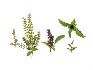 thyme and basil flowers herbal on white background.
