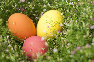 Background with Easter Eggs in the Gypso Fresh Green Grass