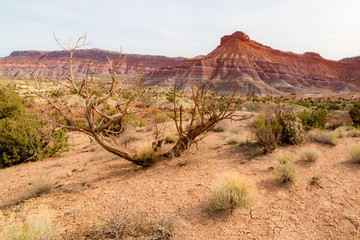 Wilderness of Grand Staircase National Monument, Arizona