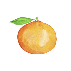 Watercolor Mandarin Hand-Painted Isolated