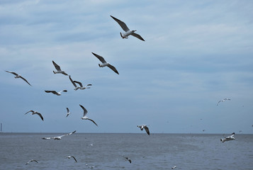 Seagulls flying over the sea,Thailand