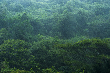 Heavy rain falling over a coastal forest