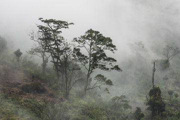 Mount Gorongoza mist-forest shrouded in thick mist