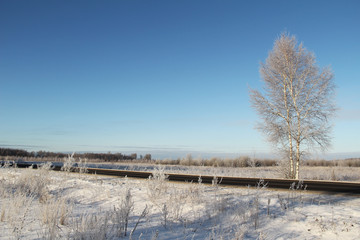 One frozen birch tree near the road and blue sky.