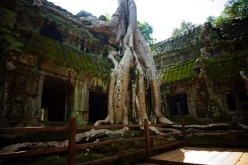 Tempel Ta Prohm Kambodscha