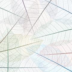 Foto op Canvas Decoratief nervenblad nervures de feuilles mortes, fond carré