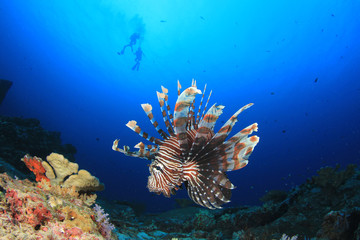 Scuba divers and lionfish fish underwater