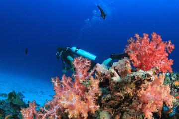 Scuba dive underwater coral reef