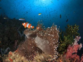 Underwater coral reef and fish in ocean