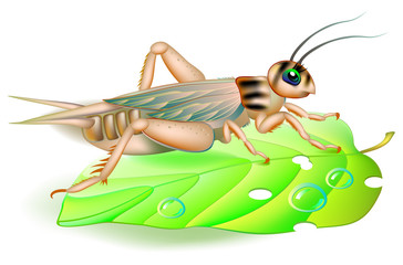 Illustration of cute cricket sitting on a green leaf.  Vector cartoon image.