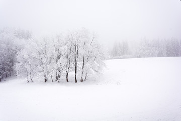 Snowy and frozen landscape of forests