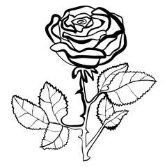Vector illustration of rose black and white