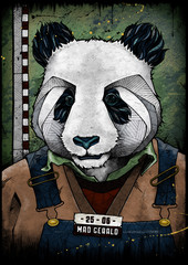 Panda mugshot, illustration