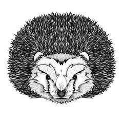 Hedgehog, illustration, black and white