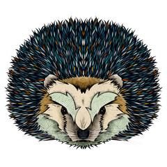 Hedgehog, illustration