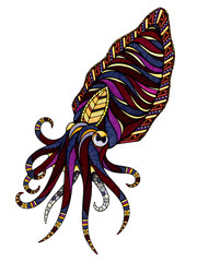 Cuttlefish, illustration
