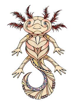 Axolotl, illustration