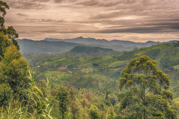 Sri Lanka: highland tea fields next to Nuwara Eliya