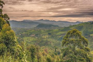 Sri Lanka: highland tea fields next to Nuwara Eliya