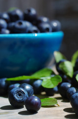 Berries of ripe juicy bilberry in a blue small plate on a wooden table.