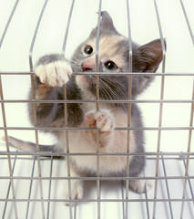 kitten in a cage on white background