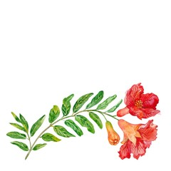 Flowers of a pomegranate. Watercolor.
