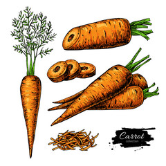 Carrot hand drawn vector illustration set. Isolated Vegetable artistic style object with sliced pieces.