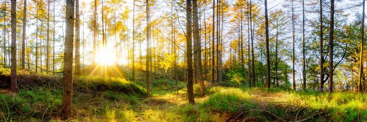 Wald Panorama im Herbst bei Sonnenschein