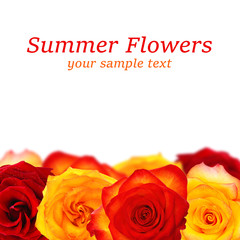 Beautiful flowers on white background. Text SUMMER FLOWERS