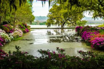 Magnolia Plantation & Gardens 6