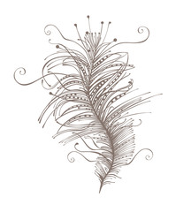 Feather. Beautiful vector silhouette.