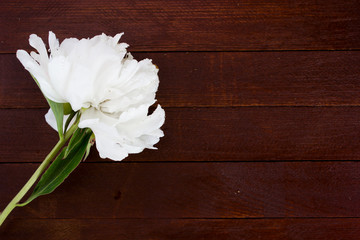 White flowers of peonies on wooden table
