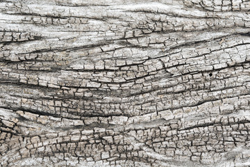 Texture of old wood background