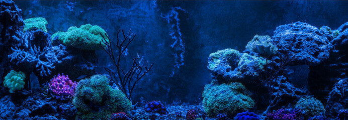 In de dag Onder water Reef tank, marine aquarium. Gorgonaria Euplexaura, Sea Fan. Clavularia. Zoanthus. Blue aquarium full of plants. Tank filled with water for keeping live underwater animals. Night view.