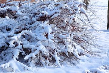 krzewy i drzewa liściaste w zimie
