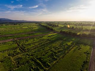 Papiers peints Vignoble Sunset above Rice Field