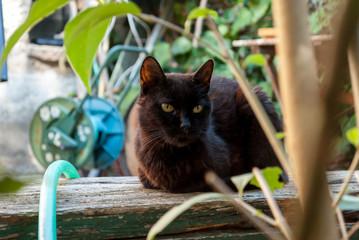 Gatto nero anziano in giardino