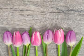 Tulpen auf Holzhintergund