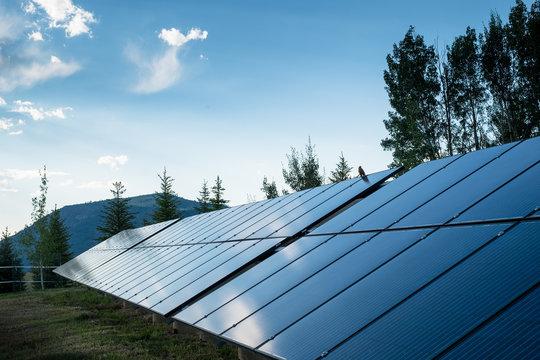 Solar Panels with Hawk