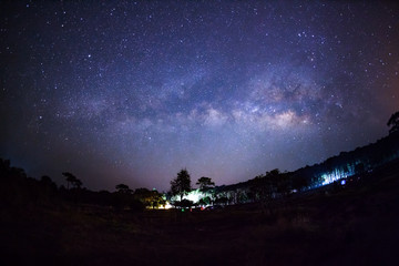 Milky way and silhouette of tree at Phu Hin Rong Kla National Pa