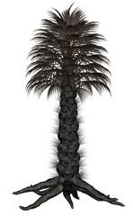Palmtree, palm tree - 3D render